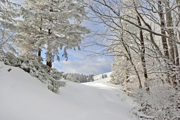 Weg in het winterbos