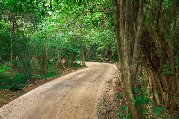 Weg in magisch donker bos