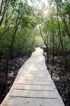 Weg in mangrovebos in thailand