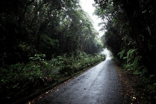 Weg in tropisch boslandschap