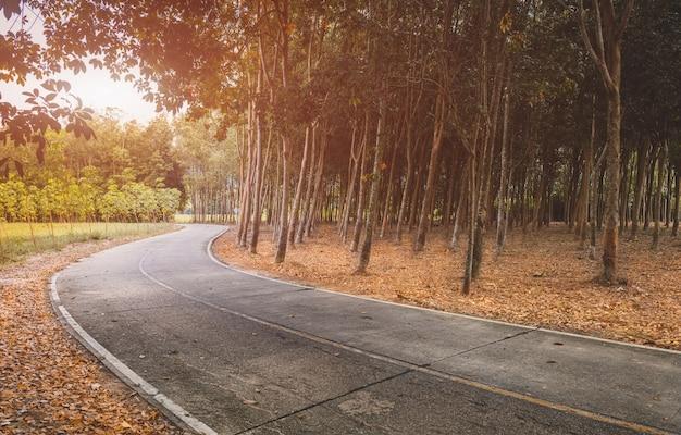 Weg met bomenkant in de herfstseizoen.