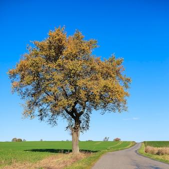 Weg met boom op een zonnige dag in de herfst