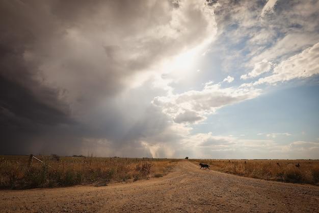 Weg met een hond erop, omringd door velden onder een bewolkte hemel en zonlicht