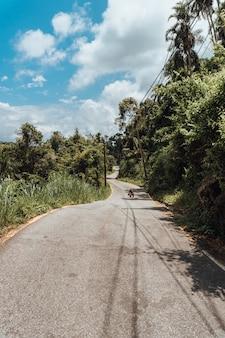 Weg met het tropische woud in brazilië