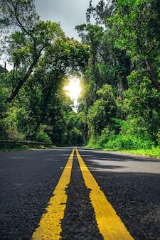 Weg met twee gele lijnen in hawaiian forest