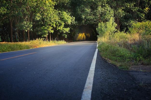 Weg naar donkere boomtunnel, landweg met boomtunnel