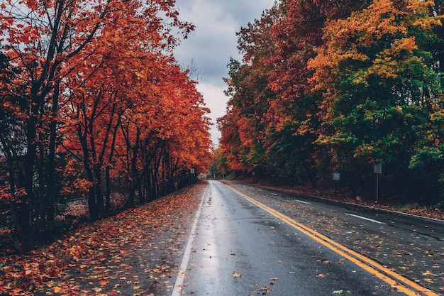 Weg omgeven door bomen met kleurrijke bladeren in de herfst
