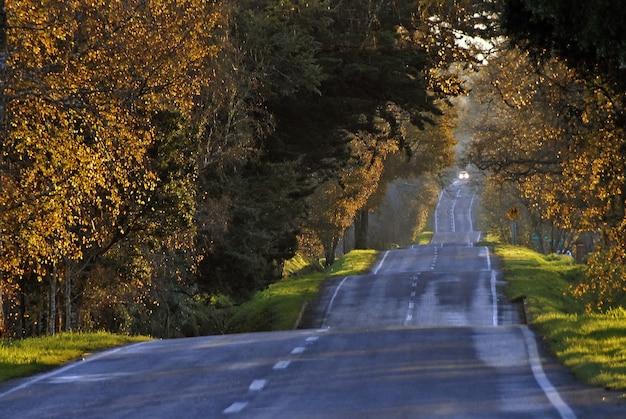 Weg omringd door hoge bomen die overdag in de herfst zijn vastgelegd