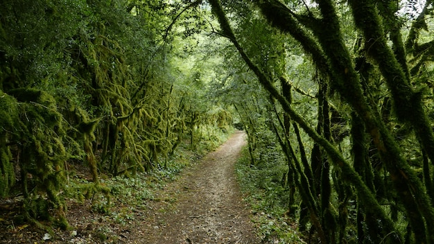 Weg op het bos