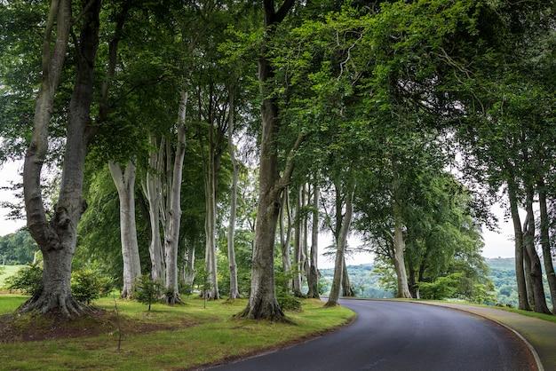 Weg tussen hoge bomen. ierland, wicklow-park
