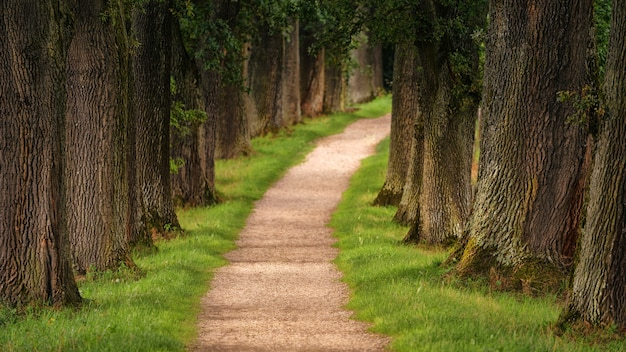 Weg van bomen overdag