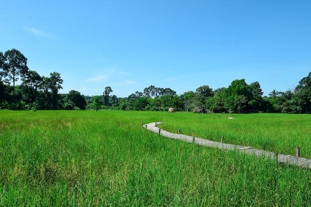 Wegbrug in het midden van het rijstveld.