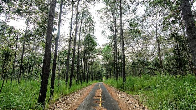 Weggesneden door redwood forest in thailand