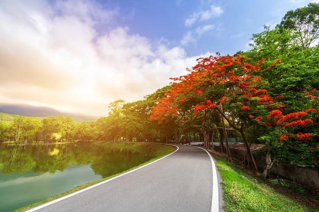 Weglandschapsmening en tropische rode bloemen