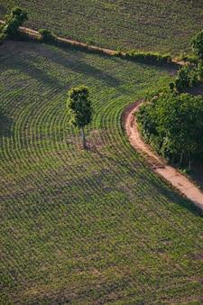 Wegmening van hierboven met boom op het platteland aziaat - luchtmening over bergweg die door boslandschap en landbouwgebied gaan