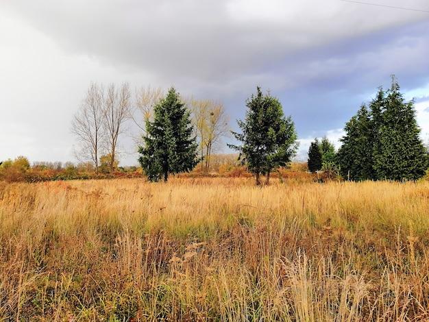 Weide bedekt met het gras en de bomen onder een bewolkte hemel tijdens de herfst in polen