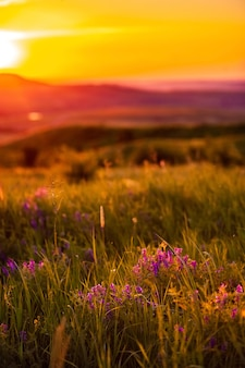 Weide met bloemen op de zonsondergangachtergrond