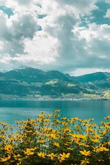 Weide met gele bloemen op de achtergrond van het meer van luzern en zwitserse bergen met velden