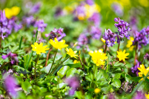 Weide met veelkleurige bloemen