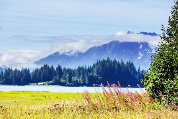 Weide op alaska