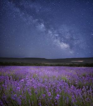 Weide van lavendel 's nachts.
