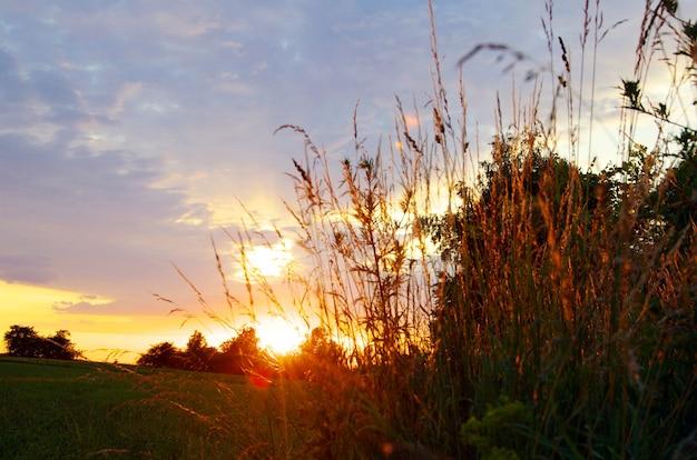 Weidegras op een zonsondergang