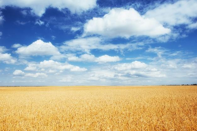 Weidetarwe onder hemel