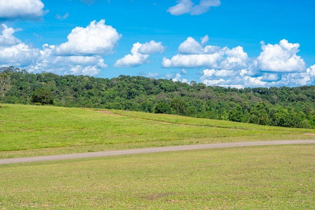 Weiland en bos op heuvels en blauwe hemel op de zomer