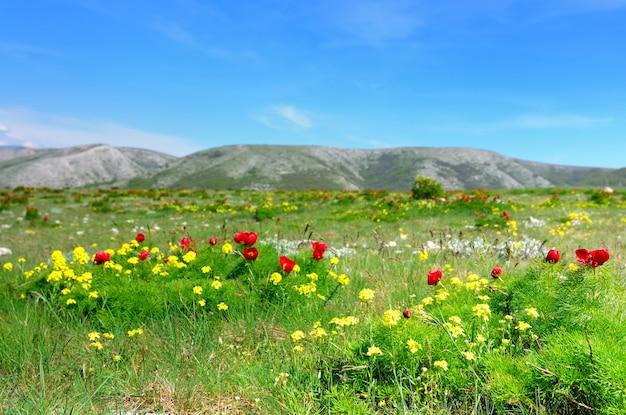 Weiland met groen gras en rode papaverbloemen