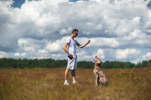 Weimaraner-hond zit op het veld en concentreerde zich op de hand van de mannelijke eigenaar tijdens het trainen om te gehoorzamen met stuk