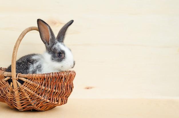 Weinig babykonijn, konijntje dat slablaadjes en wortel in de mand eet. voer voor knaagdier, huisdier. vrolijk pasen concept.