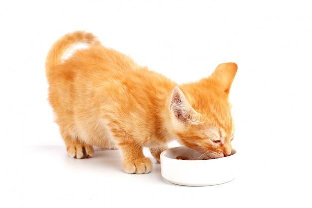 Weinig gemberkatje eet kattenvoedsel uit een kom.