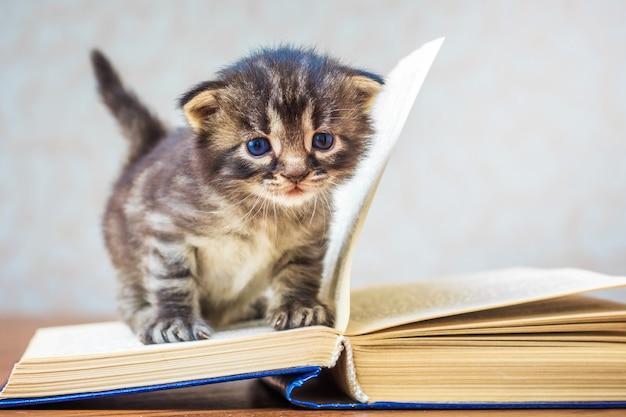 Weinig gestreepte leuk katje zit op boek. kitten met blauwe ogen. kind leert lezen. eerste stappen om te leren. kopieer spase voor text_
