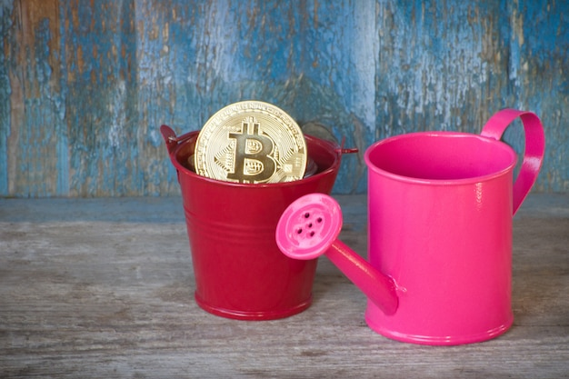 Weinig gieter en munt bitcoin in pot. oude houten achtergrond. bedrijfsconcept