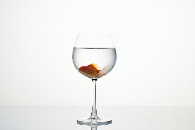 Weinig goudvis die zich in wijnglas water beweegt
