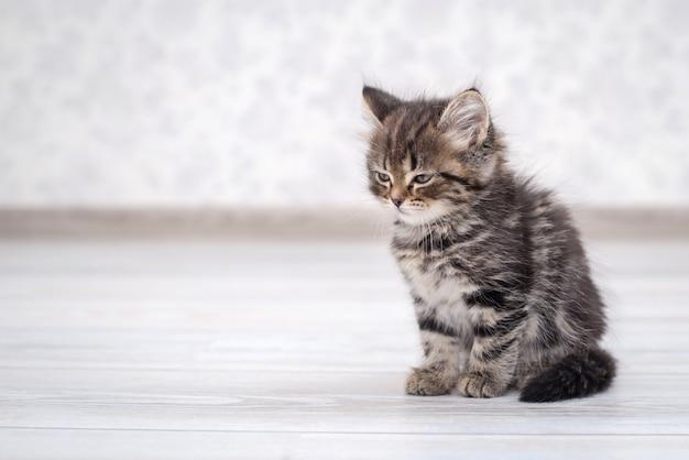 Weinig grappig katje op de vloer