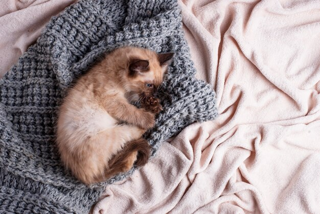 Weinig grappig katje op gebreide plaid