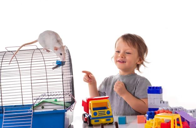 Weinig jongen die met een wit rattenhuisdier speelt
