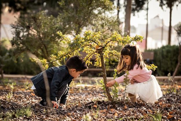 Weinig jongen en meisje die en een boom in een park spelen cultiveren