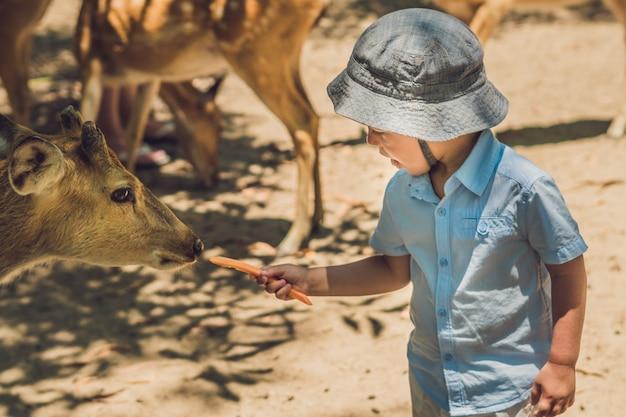 Weinig jongens voedende herten in landbouwbedrijf. detailopname
