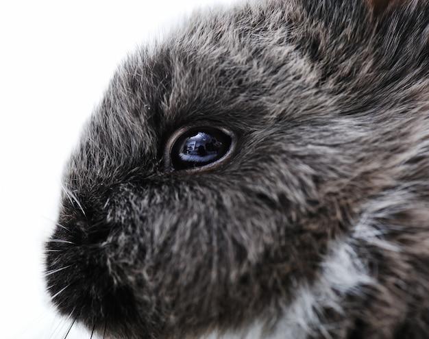 Weinig konijn op wit