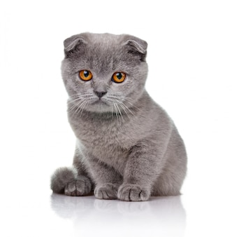 Weinig met hangende oren geïsoleerd katje
