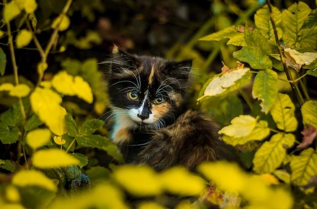 Weinig pluizig dakloos katje. kleine dierlijke pluizige kat
