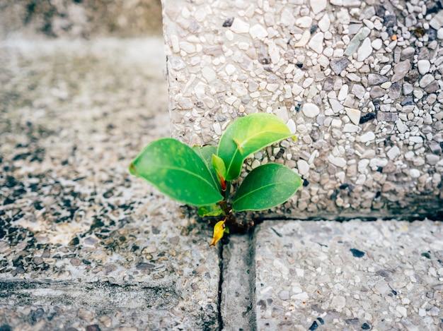 Weinig sterke spruit groeit in de hoek van betongrond.