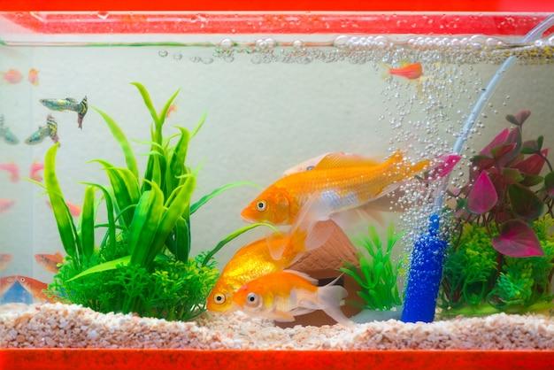 Weinig vis in aquarium of aquarium