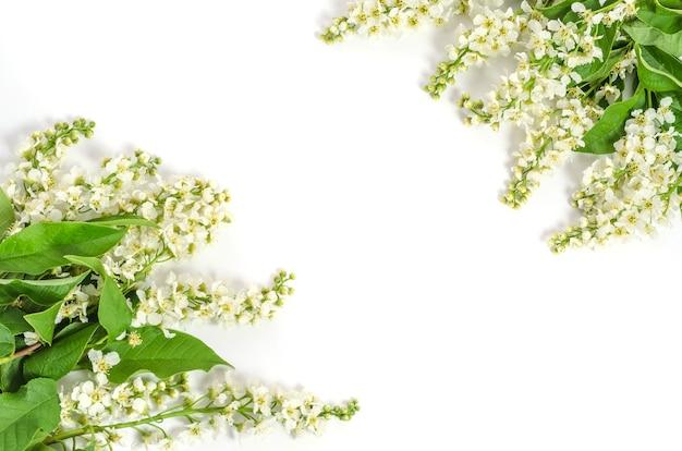 Wenskaart achtergrond, delicate kersenbloemen op witte achtergrond met kopie ruimte