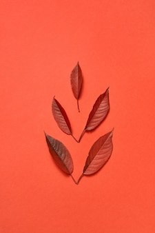 Wenskaart handgemaakt van kleurrijke herfstbladeren op een koraalachtergrond met zachte schaduwen, kopieer ruimte. plat leggen.