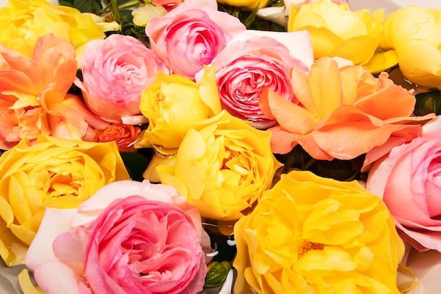 Wenskaart met engelse rozen in pastelkleuren met druppels op bloemblaadjes na regen in water