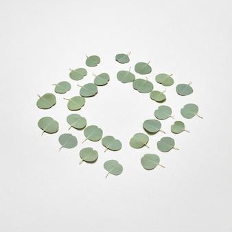 Wenskaart van kleine bladeren van verse natuurlijke groenblijvende eucalyptusplant als een ruitframe op een lichtgrijze muur. bovenaanzicht.