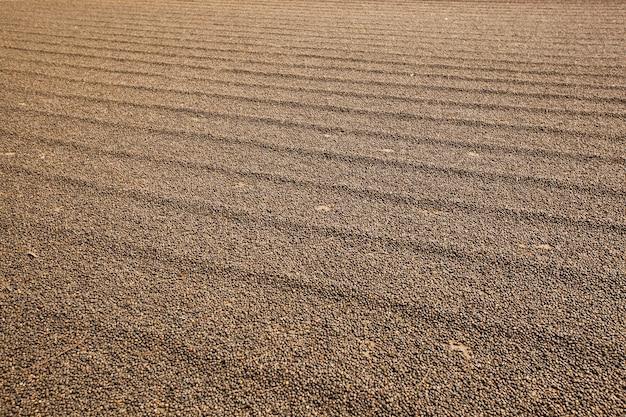 Werf van rauwe koffie. koffie geoogst op de grond.